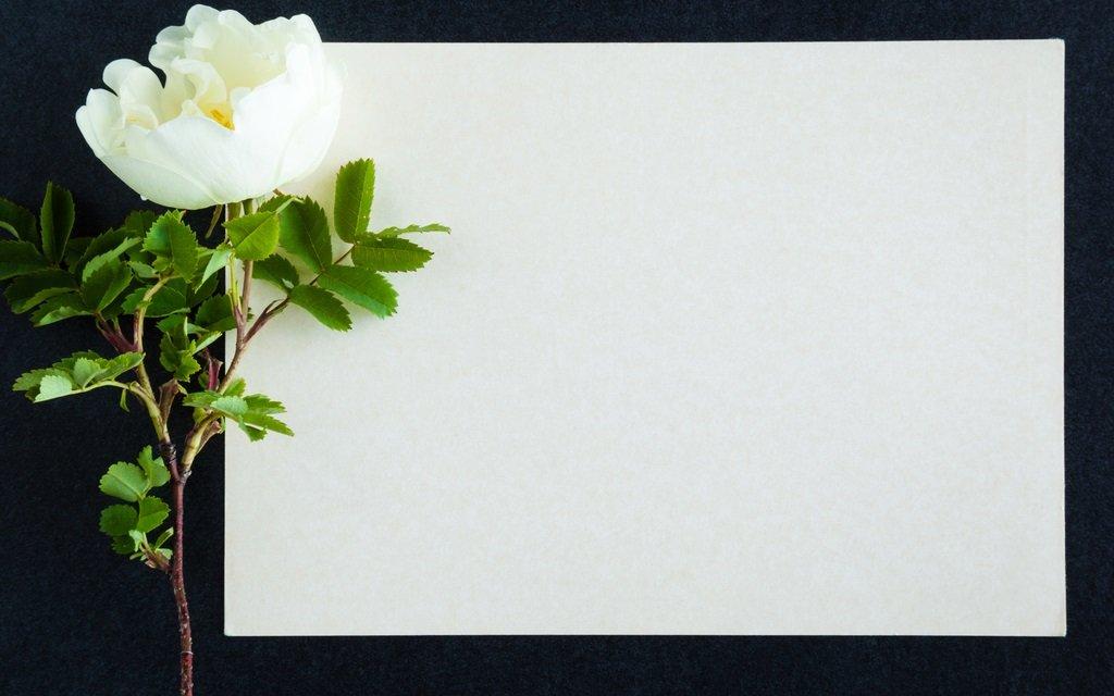 Todesfall Beileid Aussprechen Im Büro Workingofficede